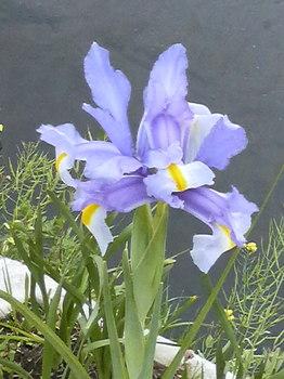 海老川の花